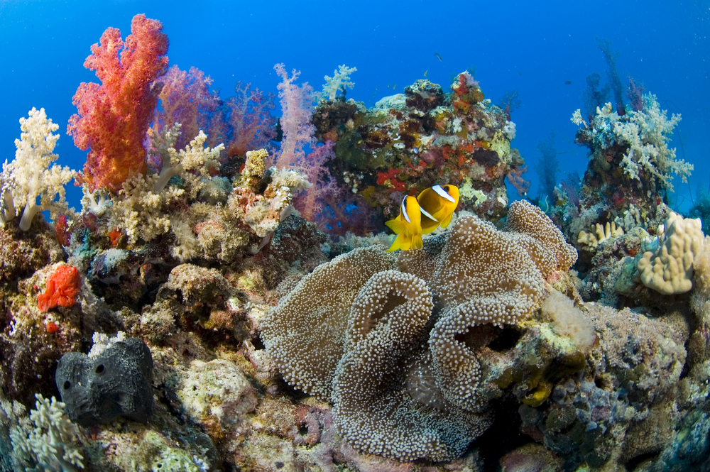 3coral reefs are dying around the